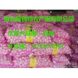 蒜种种植技术  优质高产大蒜种 大蒜管理技术 金乡大蒜种植技术 大蒜种子