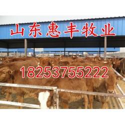 山东惠丰牧业 济宁出售肉牛犊价格